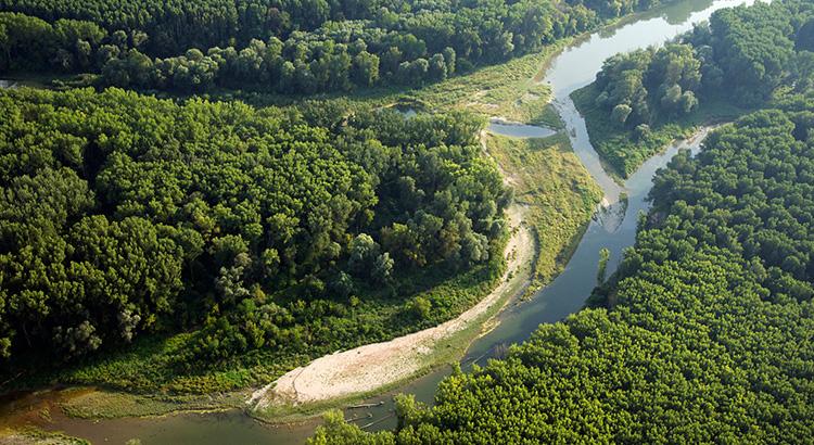 Mitterhaufen im Nationalpark Donau-Auen (Foto beigestellt © Nationalpark Donau-Auen)