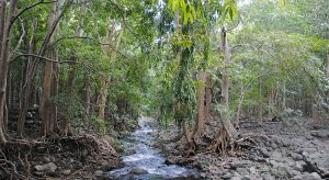 Dschungel pur auf Mauritius (© Reisekompass)