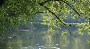 Seitenarm im Nationalpark Donau-Auen (Foto beigestellt © Nationalpark Donau-Auen - Kern)
