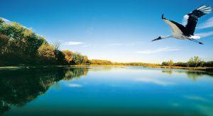 Seitenarm in der Lobau im Nationalpark Donau-Auen (Foto beigestellt © Nationalpark Donau-Auen - MA49)