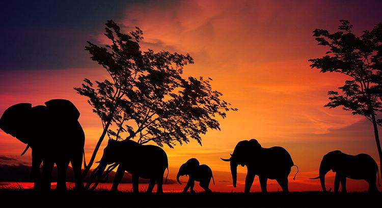 Elefanten - Highlight einer Safari (F: Pixabay 4144132)