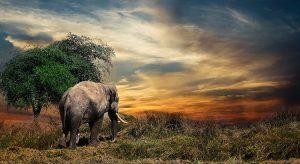 Elefant (F: pixabay joeclub_ake)