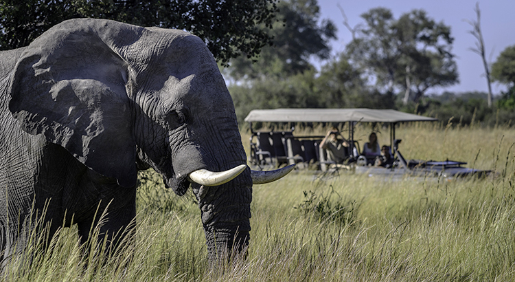 Elefanten-Safari in Botswana (© Wilderness Safaris, Dana Allen / beigestellt)