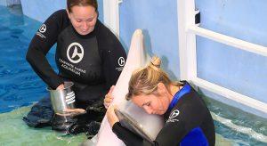 Camille Zodrow (vorne) und einer der Delfine des CMA (Foto: beigestellt)