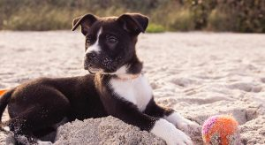 Fliegen mit Hund Reisekompass