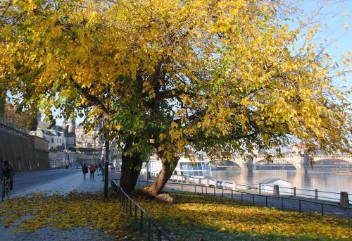 Dresden: Szene an der Elbe im Herbst © Reisekompass